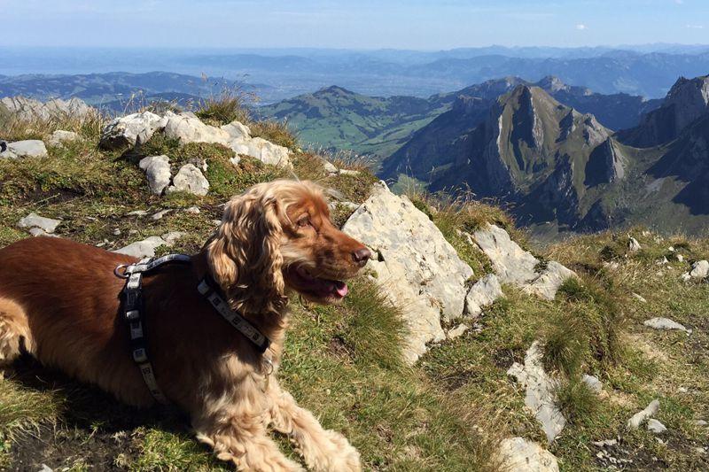 mein-reiseglueck-urlaub-mit-hund